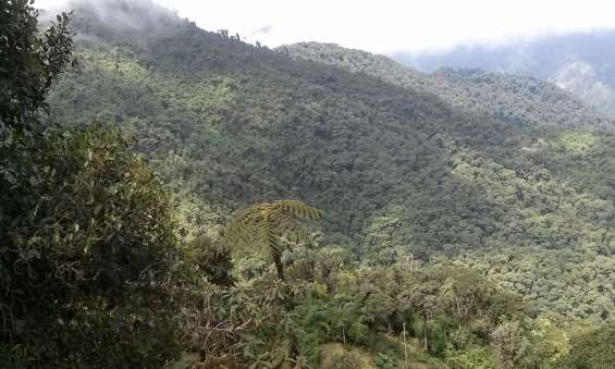 Vendo barato 450 hectáreas de bosque nublado cerca a quito
