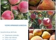 Venta de plantas de durazno nueva variedad gran jarillo rojo colombiana